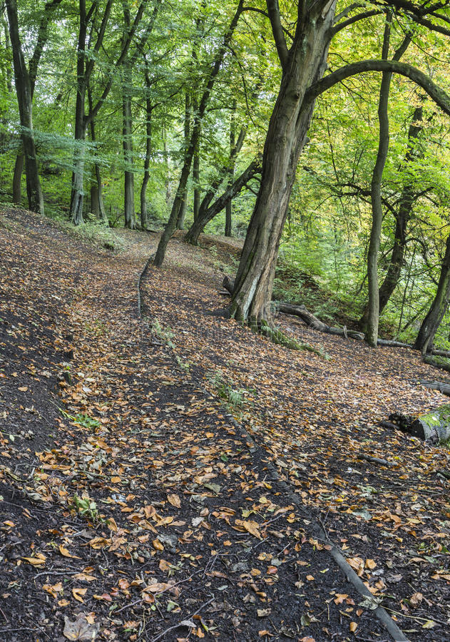 Path along the hillside from the river at Daisy Nook Country Park. Near Oldham, Lancashire, England, UK on an early Autumn day stock images