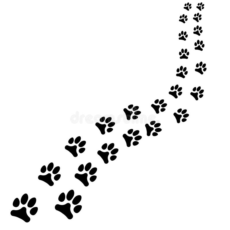 Path of animals black footprints, dog or cat path turns right on white background. Path of animals black footprints, dog or cat path turns right. Vector vector illustration