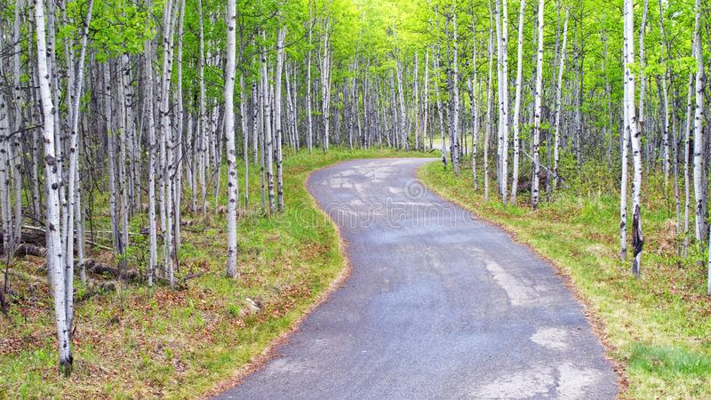A path through an Aspen forest stock image
