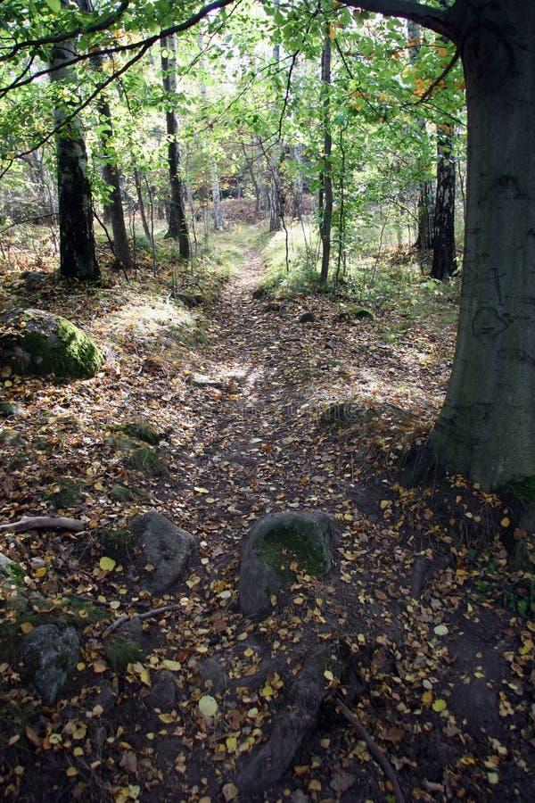 Download Path through autumn stock image. Image of nature, park - 263059