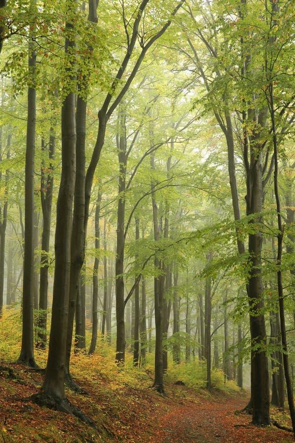 Trail through an autumn forest on a misty, rainy day stock photography