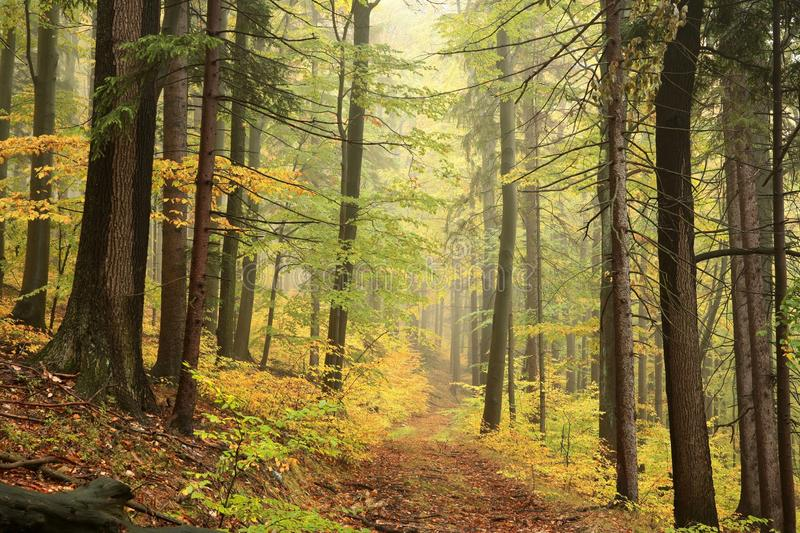Trail through an autumn forest on a misty, rainy day royalty free stock photo