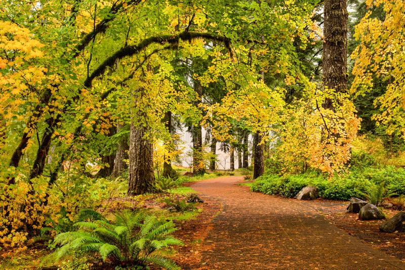 A path through autumn foliage forest in Silver Falls State Park, Oregon royalty free stock photos