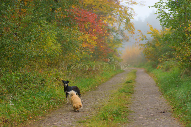 Download Path In An Autumn Forest Royalty Free Stock Photography - Image: 26694727