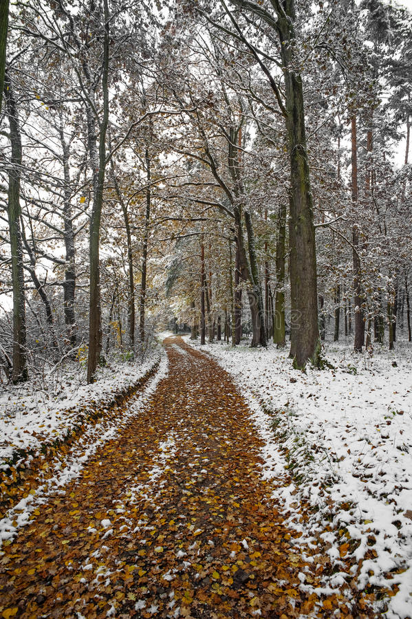 Download A path in an autumn forest stock photo. Image of flurry - 27371050