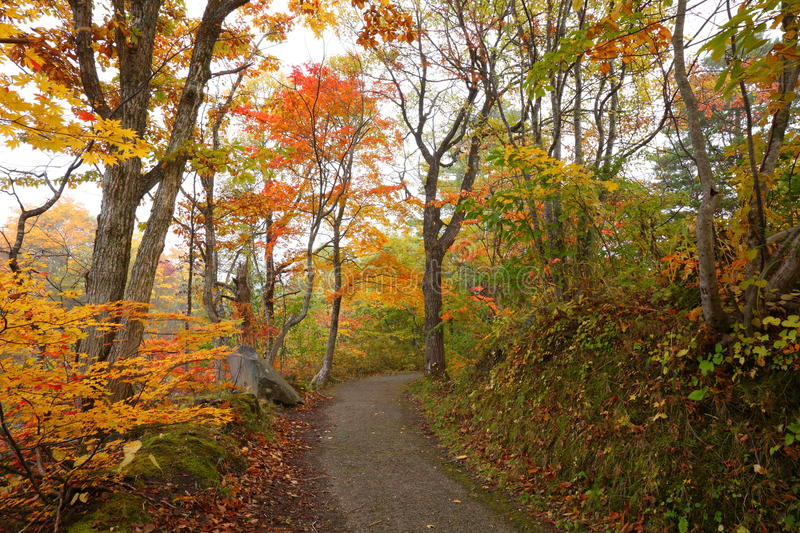 Path in autumn forest
