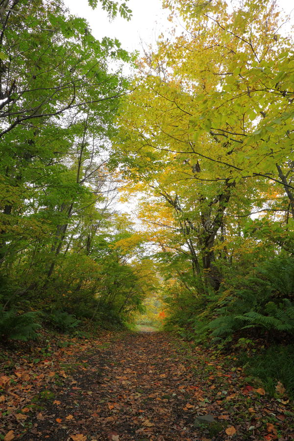 Download Path in autumn forest stock photo. Image of leaf, japan - 28458588