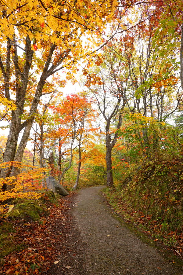 Download Path in autumn forest stock photo. Image of october, fall - 29609716