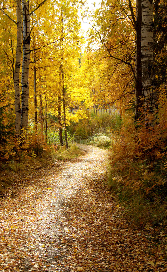 Download Path in Autumn Forest stock photo. Image of forest, walkway - 6503460