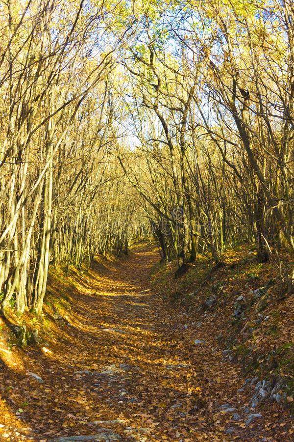Path in autumn forest royalty free stock images