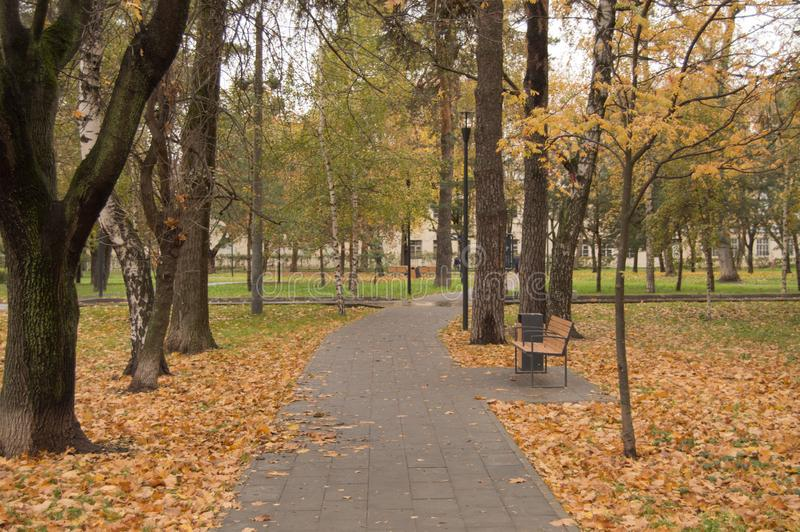 Path through the autumn forest in the city Park, fallen yellow and orange leaves.  royalty free stock photography