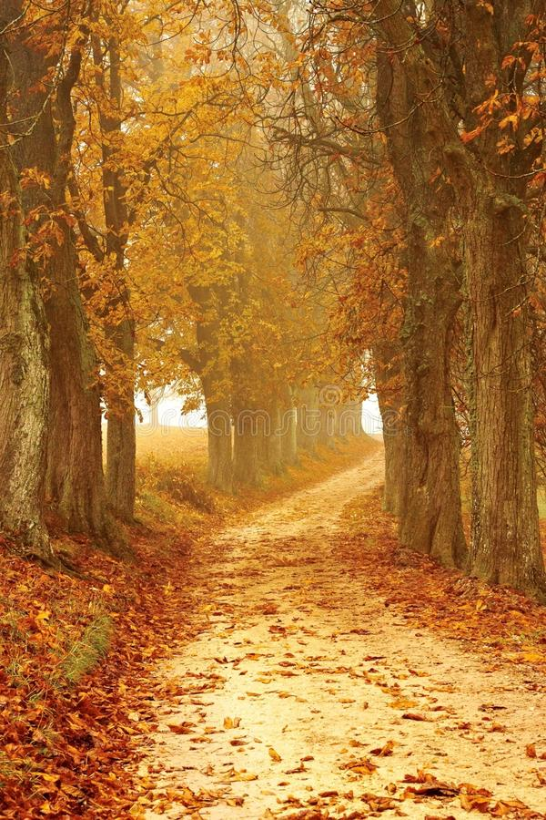 Path through autumn forest stock image