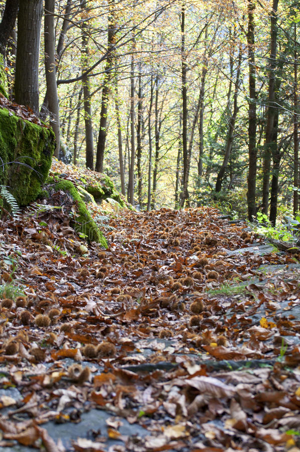 Download Path In Autumn Forest Stock Photos - Image: 34722453