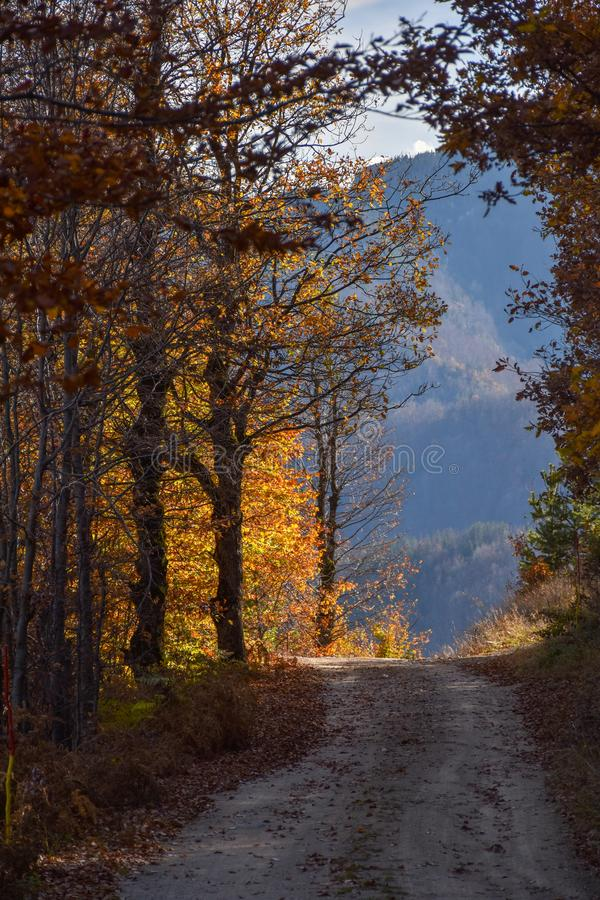 Path in an autumn forest leading to an opening royalty free stock image