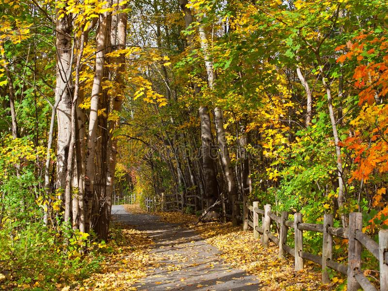 Path in autumn forest. stock image