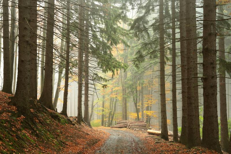 Trail through the misty autumn forest stock images