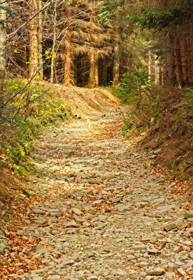 Path in autumn forest. Romantic path in autumn beech forest royalty free stock image