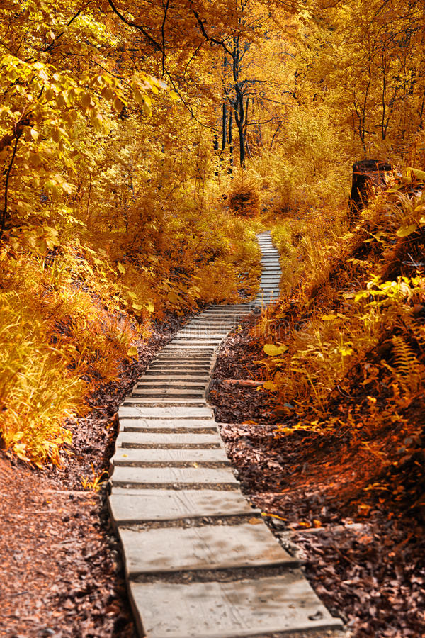 Download Path In The Autumn Forest Stock Photo - Image: 40921684