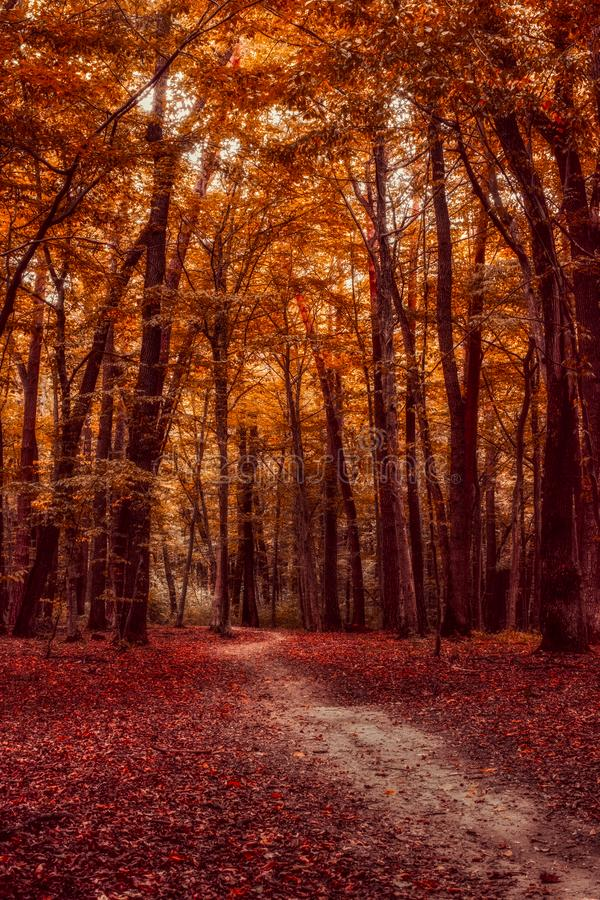 The path through the autumn forest. Vertical stock photography