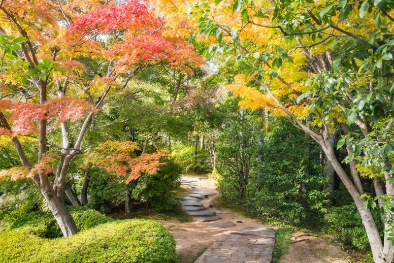 A path through the autumn maple foliage. royalty free stock photography