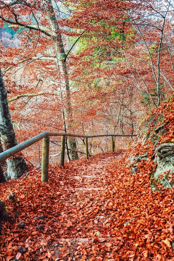 Path In The Autumn Park Stock Photography