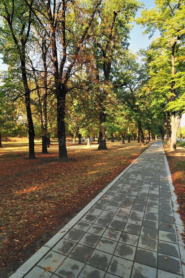 Path in Autumn Park stock photo