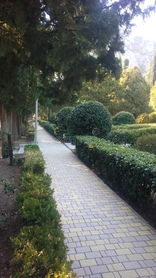 Path in the autumn park. Trees, green, nature, sky, grass, walj, walk, trail, pine, spruce, tile, rest, bushes, photo, road stock photo