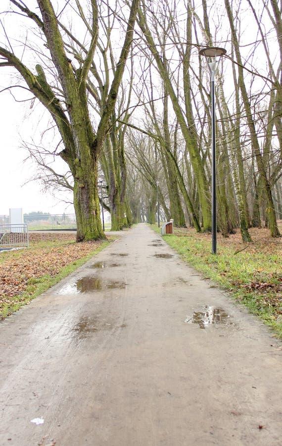 Path in autumn rainy park