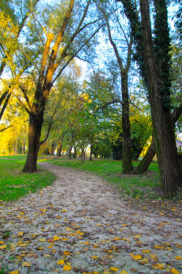 Path in autumn royalty free stock photo