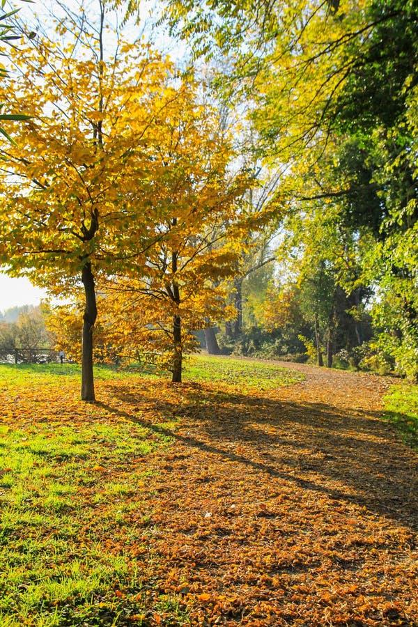 Path in autumn royalty free stock photos