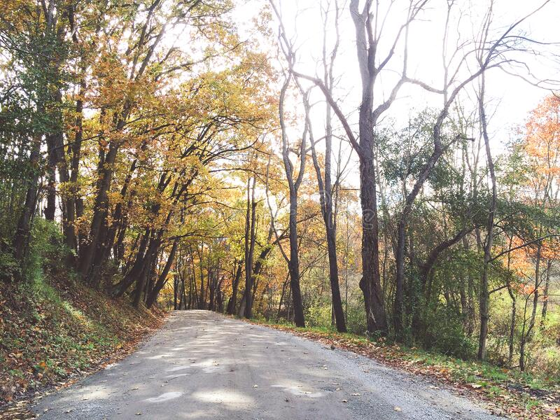 Path through autumn trees stock photography