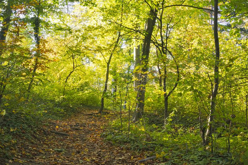 A path in autumn in the woods. Colorful stock photos