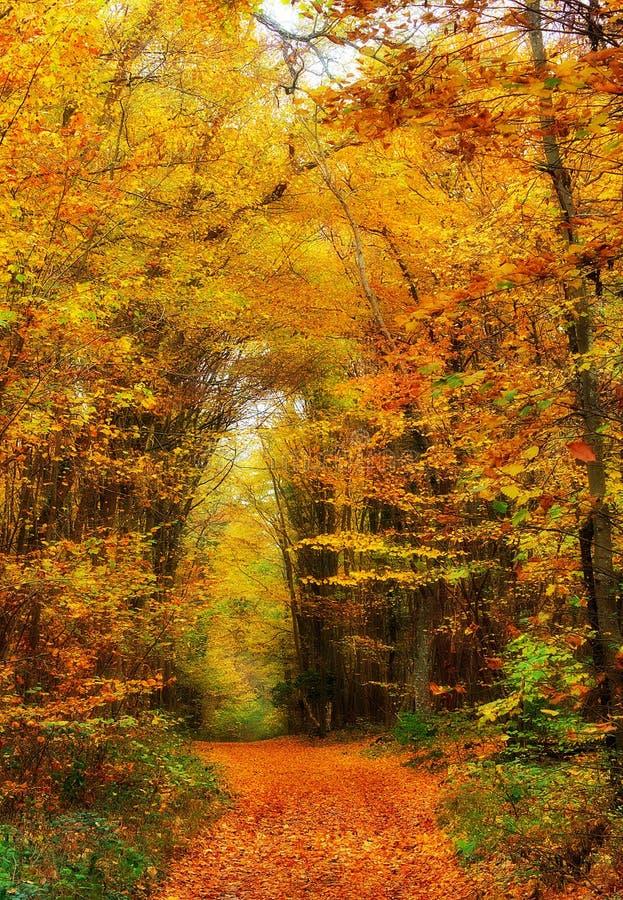 Path through Autumn woods stock photos