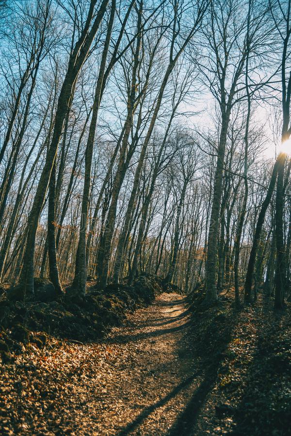 A path in an autumnal forest. During the afternoon royalty free stock image