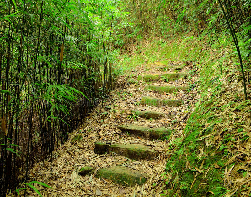 Download Path in bamboo forest stock photo. Image of stems, path - 26339968