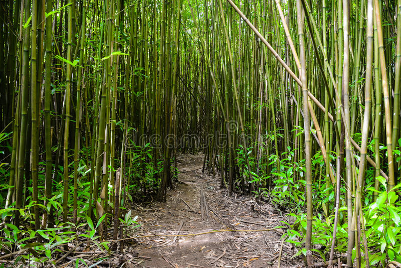 Download Path through Bamboo Forest stock image. Image of temple - 27685363
