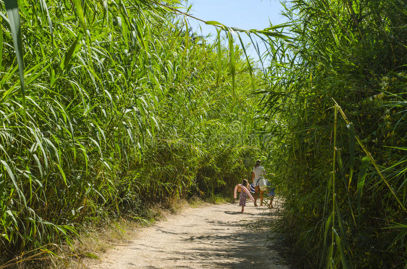 Path in a bamboo forest stock photos