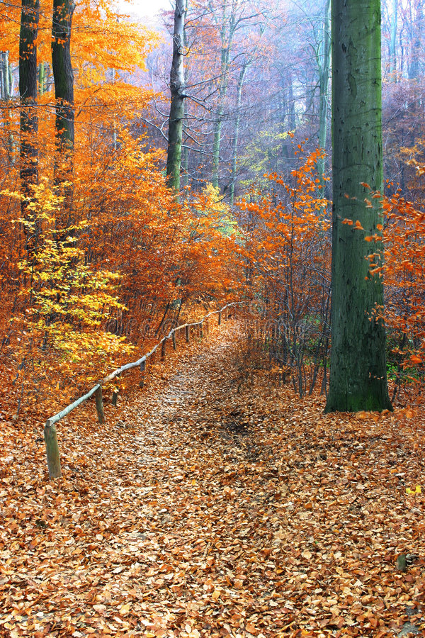 Path in beautiful fall forest royalty free stock photography