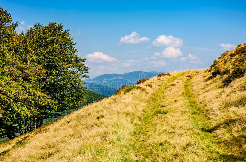 Path through beech forest on a grassy hillside royalty free stock image