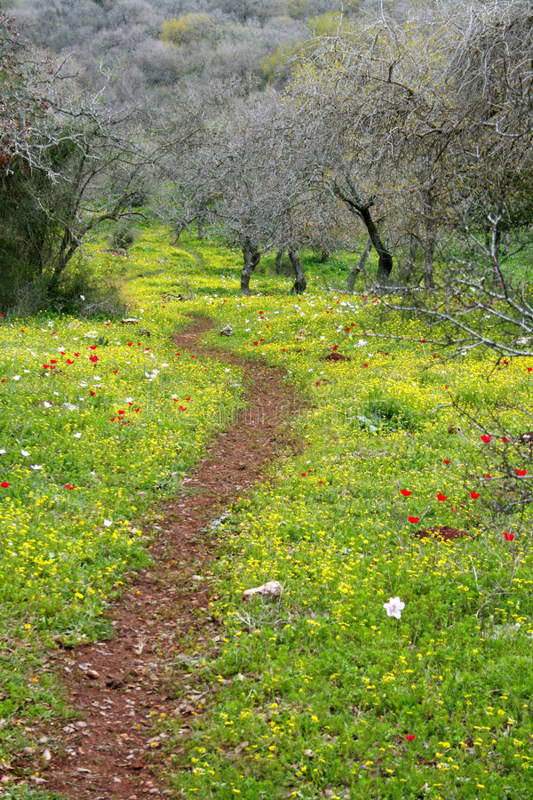 A path in blooming forest royalty free stock image