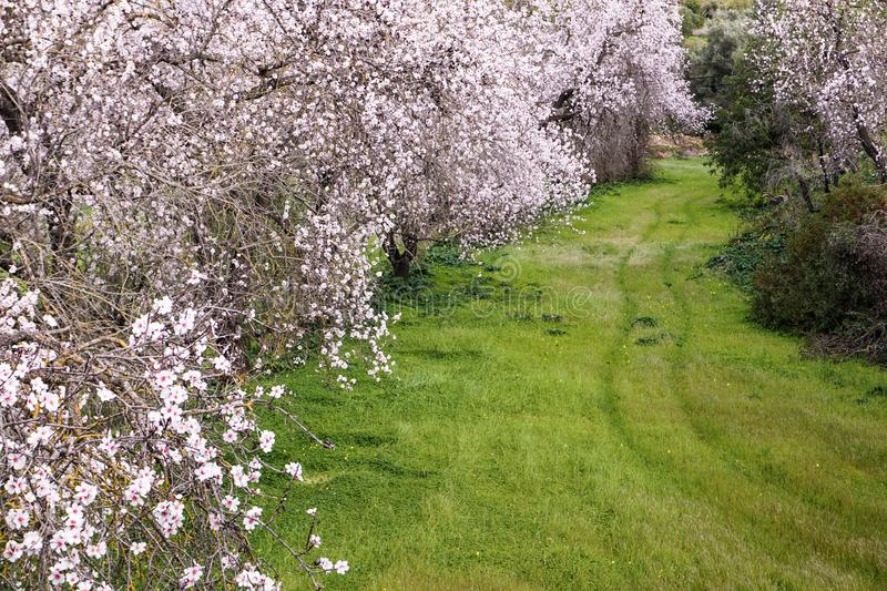 Path through the blossom. stock image