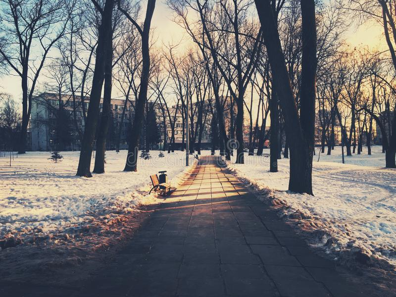 Path through city park in winter royalty free stock photo