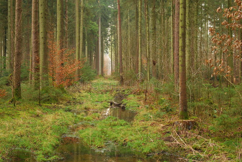 A path cleared of trees. A path made by cleared trees in the forest royalty free stock images