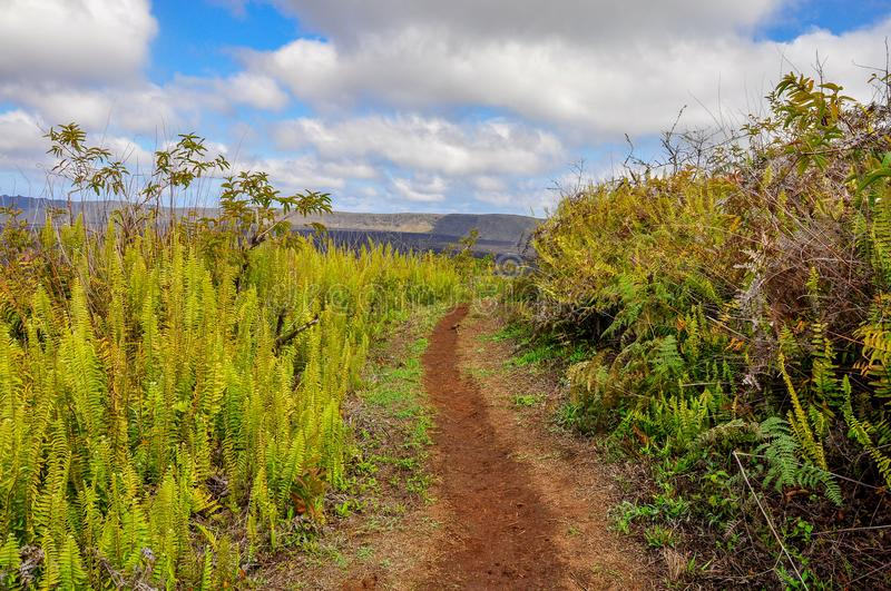 A path along the Sierra Negra Volcano. A path close to the crater of Sierra Negra, Isabela Island, Galapagos, Ecuador stock photography
