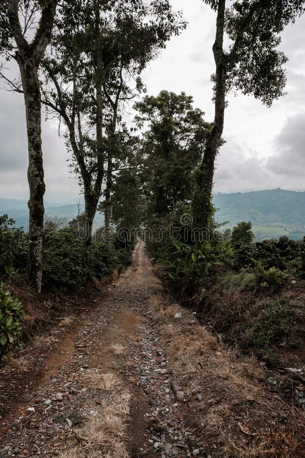 A path through coffee fields in Colombian coffee region in a mountainous area royalty free stock photo