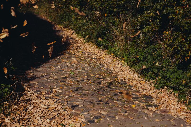 Path Covered By Leaves Free Public Domain Cc0 Image