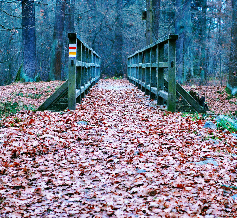 Path covered with leaves. Over the old wooden bridge stock photo