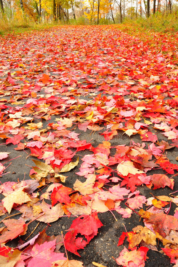 Download Path Covered With Maple Leaves Stock Image - Image: 14342779