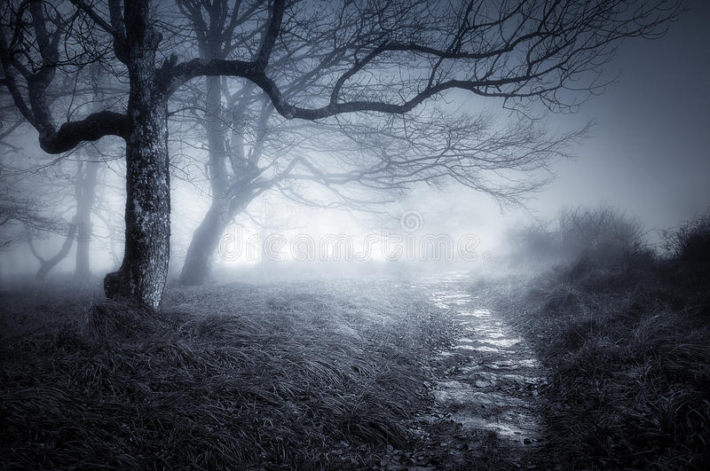 Path in dark and scary forest royalty free stock images