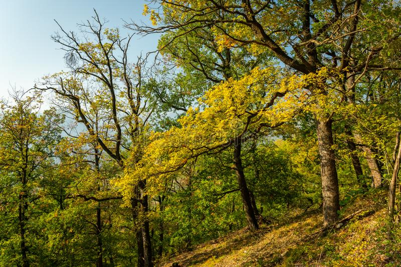 Path through a decidious forest in autumn royalty free stock photos